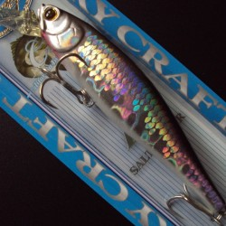 SW B'Freeze/Pointer 100SP CIF col.765 MS Anchovy